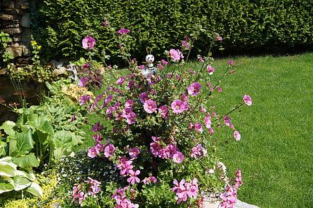 kert, mályva, giccs, virágok, rózsaszín mályva