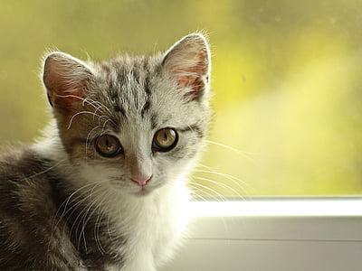 cat, kitten, puppy, playful, young cat, pet, mieze