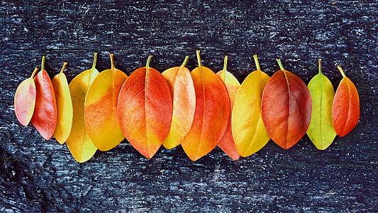 sügisel, Sügis, lehed, Värvid, oktoober, hooaja, tervisliku toitumise