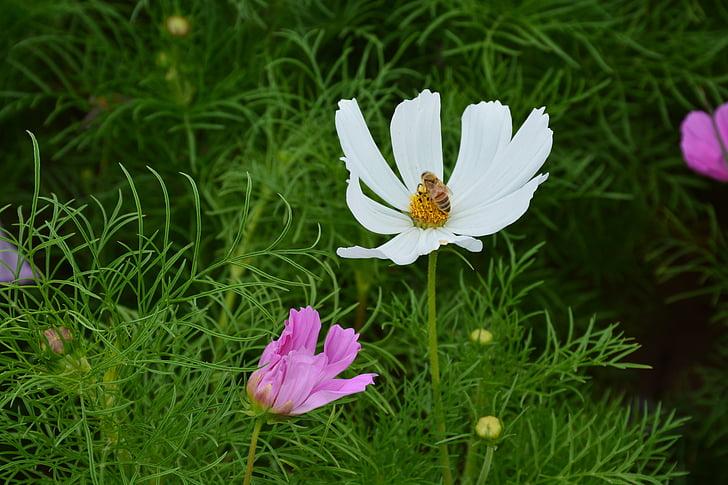 flor, gesanghua, el paisaje, hermosa, bonita