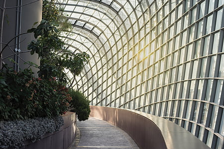 architecture, building, infrastructure, green, plant, outside, window