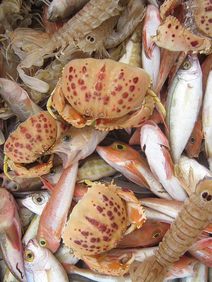 lupinarjev, morski sadeži, trg, hrane, ribe, so bile ponujene, poslastica