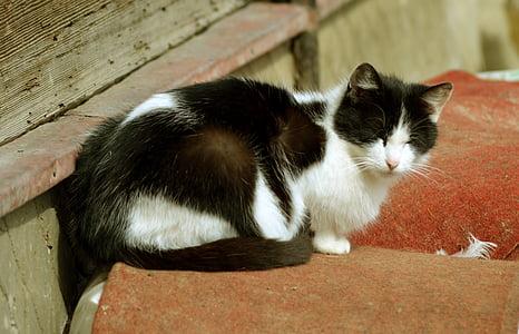 kitten, cat, a young kitten, animal, tomcat, charming, animals