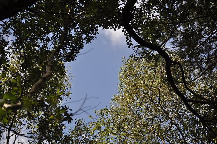 woods, clearing, woodland, sky, trees, environment, summer