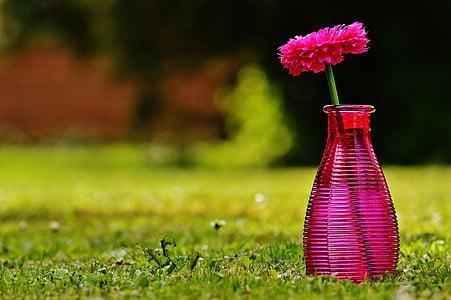 vase, glas, blomst, dekoration, Pink, gennemsigtig, Deco