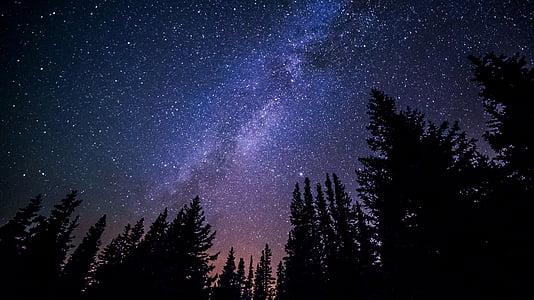 meža, naktī, debesis, zvaigžņota, zvaigznes, zvaigzne - telpa, Astronomija