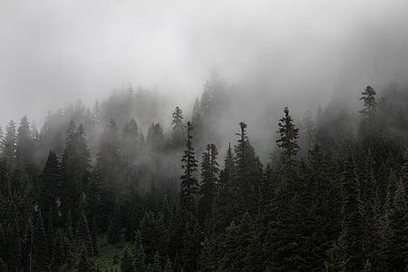 foresta, alberi, nebbia