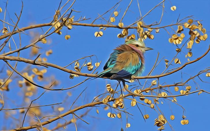 bird, songbird, cute, close, animal, animal world, spring