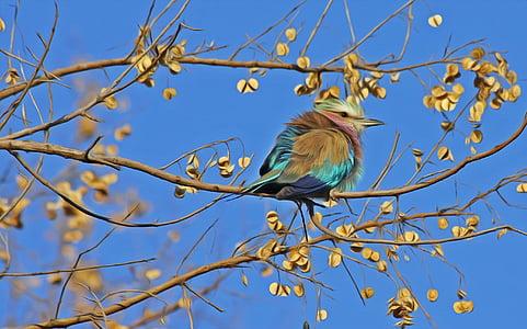 ptica, ptica pjevica, slatka, Zatvori, životinja, Životinjski svijet, proljeće
