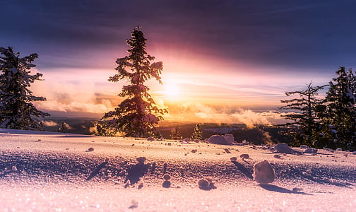 sunrise, winter, snow, panorama, forest, trees, woods
