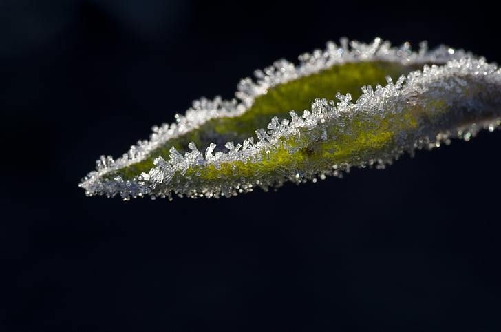 leaves, apple, frost, winter, hoarfrost, ice, cold