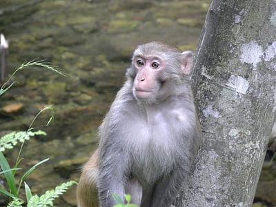 mico, Àsia, vida silvestre