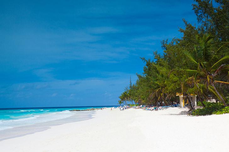 Barbados, Playa, Caribe, Costa, exóticos, vacaciones, Isla