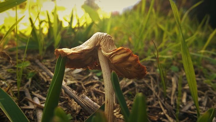 nấm, hoang dã, Thiên nhiên, tự nhiên, nấm, hữu cơ