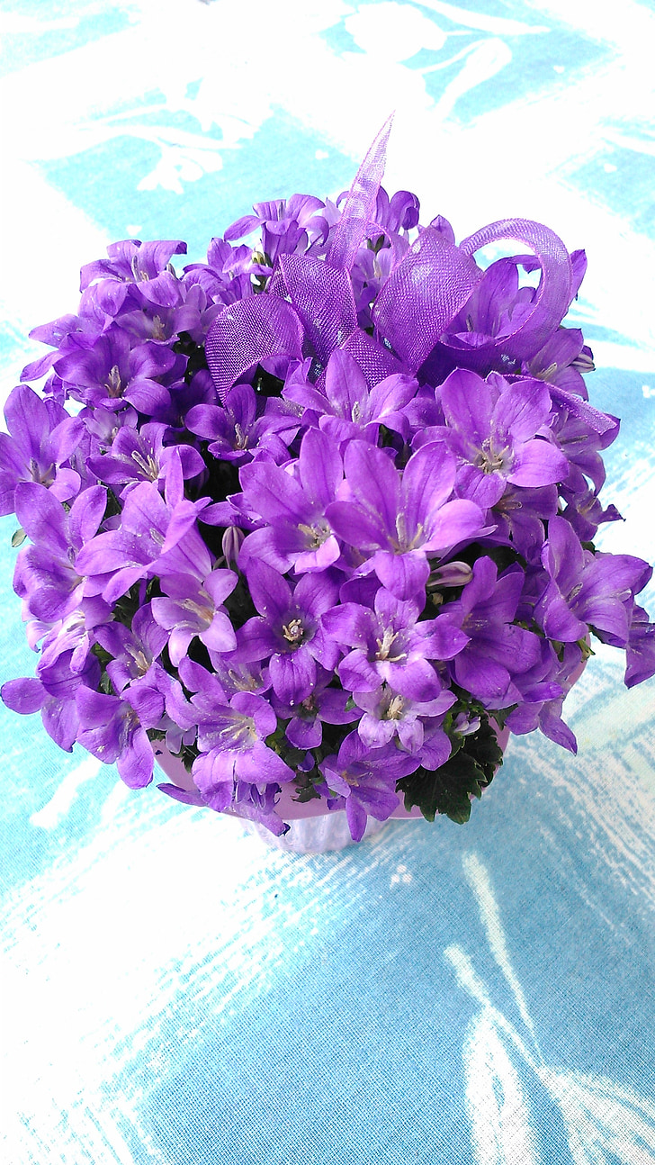 flower, purple, purple flowers, purple flower, sunlight, plant, flowers
