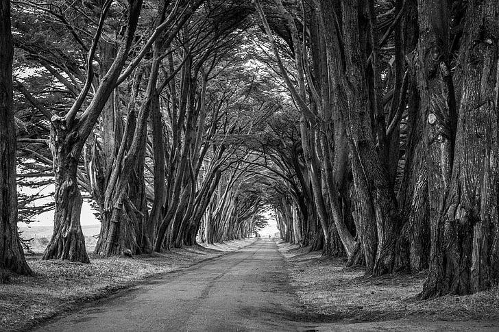 oddziały, Park, drogi, sceniczny, podróży, drzewa, drzewo
