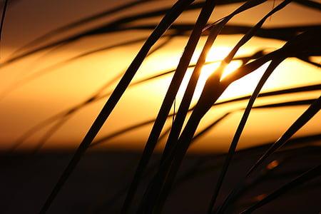 Zelenortski otoki, sončni zahod, Palme, rumena