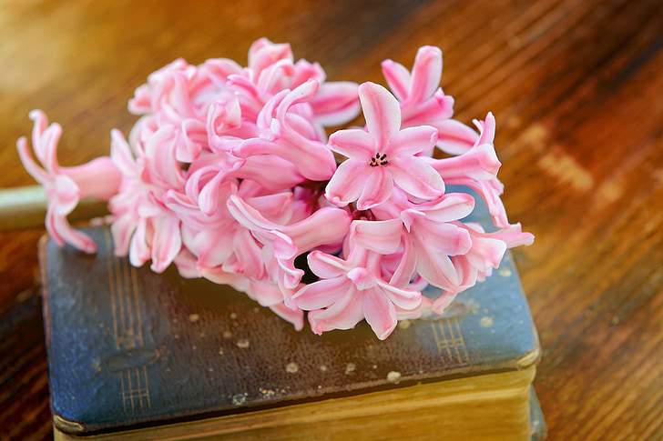 eceng gondok, merah muda, bunga, bunga, wangi bunga, wangi, buku