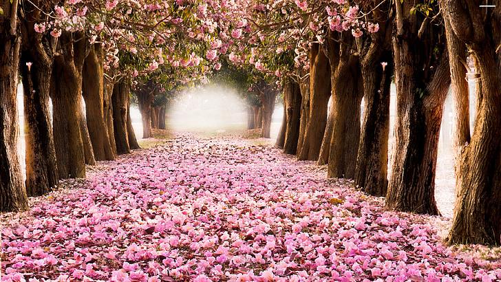 természet, kültéri, szezon, erdő, színes, virág, fa