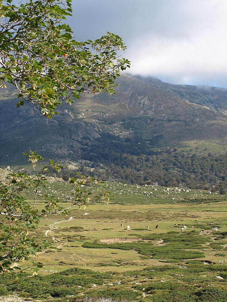 paysage, plateau, vallée de, pâturage, Corse, nature