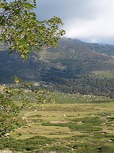 paisatge, altiplà, Vall, les pastures, Còrsega, natura
