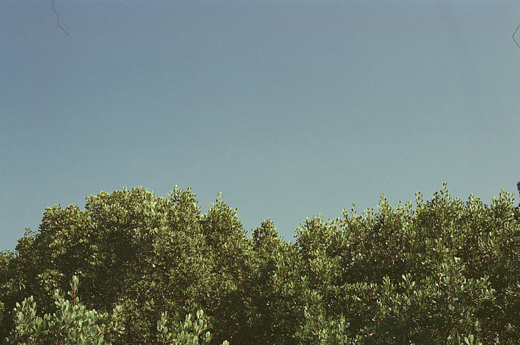 дерева, синій, небо, Природа, сезон, ліс, відкритий