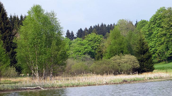 idil·li, bosc, coníferes, recuperació, paisatge, natura, harz superior aigua prestatges