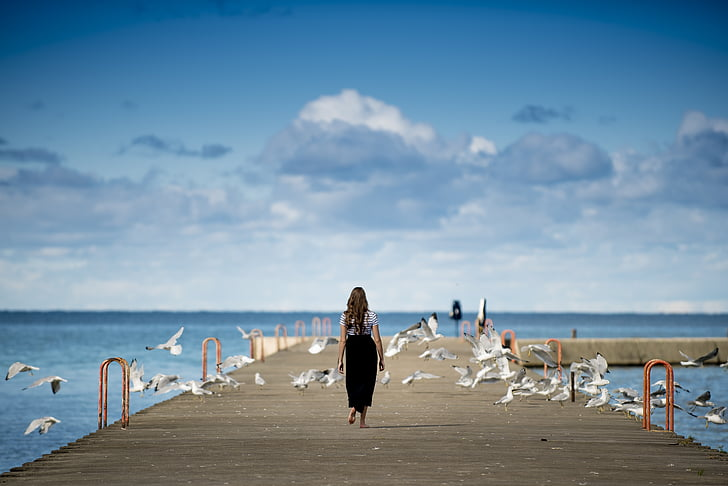 animals, ocells, núvols, gavines, oceà, persona, Moll