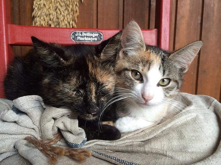 cat, animals, domestic cat, dear, friends