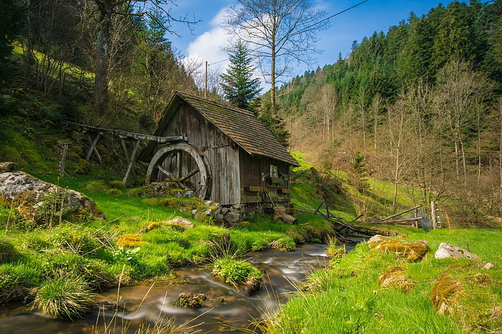 mill, black forest, bach, water, forest, landscape, trees
