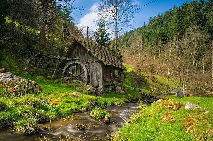 dzirnavas, Black forest, Bahs, ūdens, meža, ainava, koki