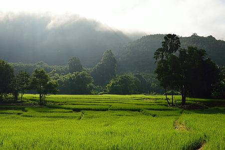 riisi Terrass, riisi, mäed, roheline, Aasia, loodus, mägi