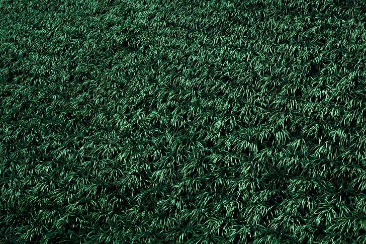 zelená, závod, zelená zelená, zelená barva, plnoformátový, pozadí, tráva