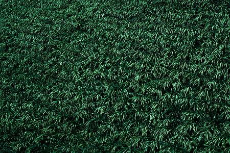 Zelená, rastlín, zelená zelená, Zelená farba, celoobvodové, pozadia, tráva