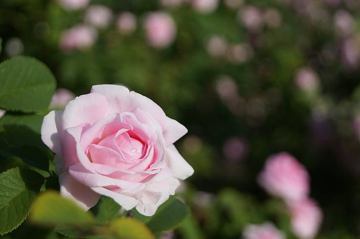 bloem, schoonheid, plant, natuurlijke, botanische tuin
