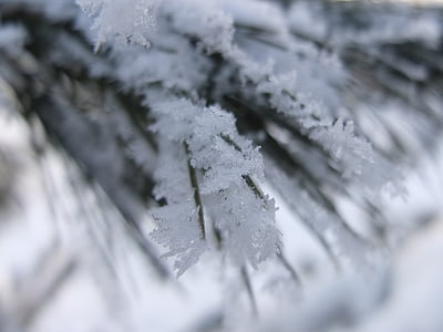 snow, winter, fir, snowy, wintry, winter magic, nature