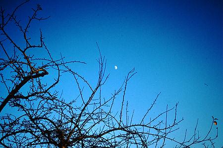 Sky, månen, natthimlen, Moonlight, träd, humör, blå