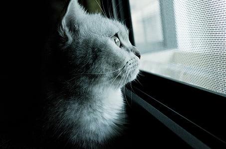 cat, cat mia, gel reviews, pet, lateral face