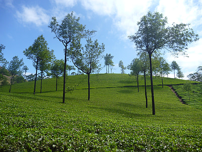 plantaža čaja, plantaža, krajolik, drvo, zelena, Indija, brda