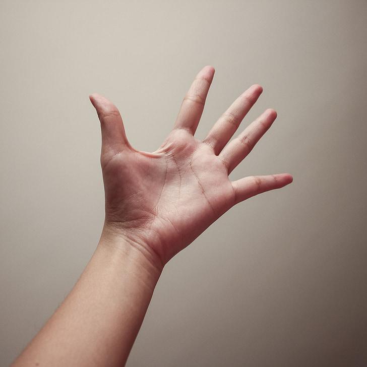 hand, fotografie, Palm, vinger, menselijke hand, gebaren, mensen