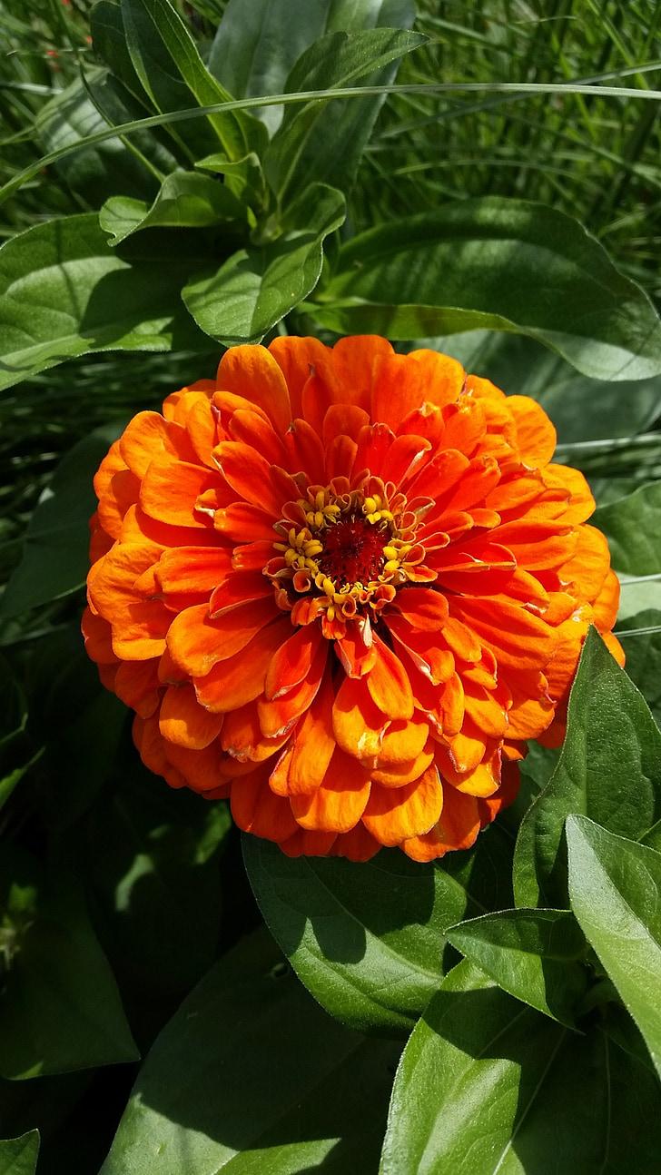 flower, garden, red, summer, blossom, bloom, orange
