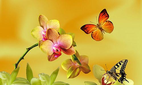 kollane orhidee, lilla orhidee, Orchid ühendatud, loodus, kevadel, Aed, botaanik