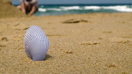 platja, closca, horitzó, Mar, l'estiu, sorra, viatges