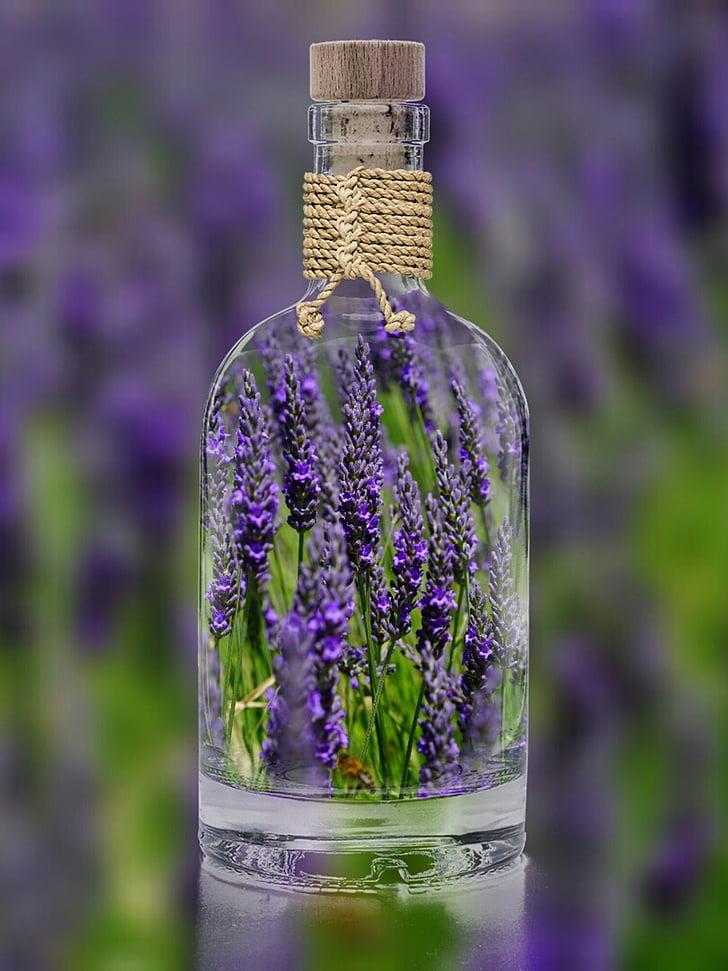 levandule, láhev, závod, jaro, fialová, Příroda, pole