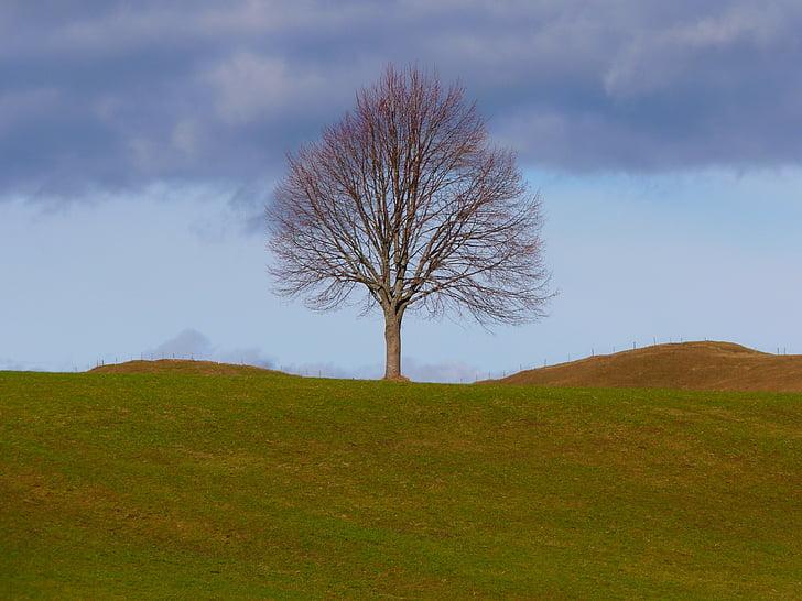 tree, individually, nature, meadow, sky, still life, branch