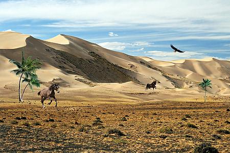 Преъри, степи, планини, растителност, пясък, природата, птици