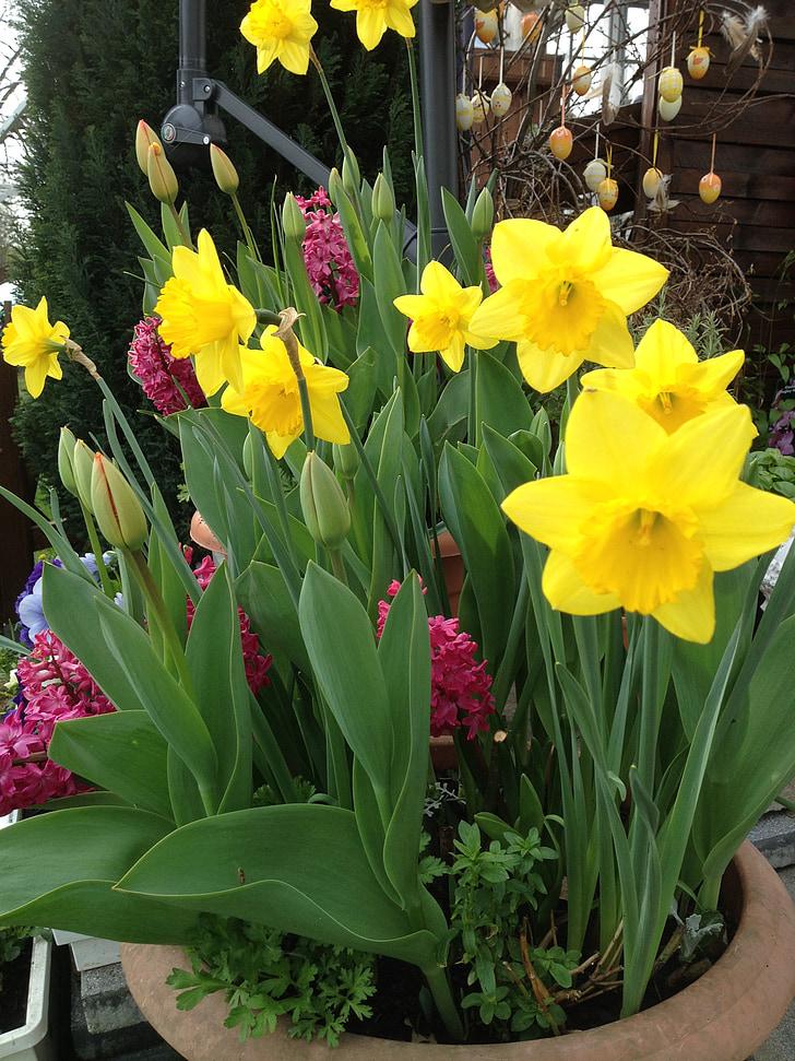 daffodils, tulips, springtime flowers, spring
