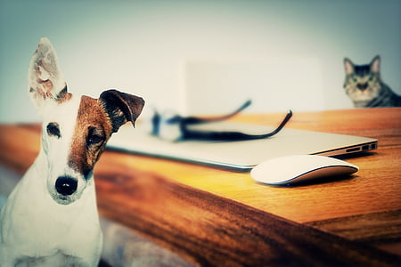 куче, котка, животни, приятел, животните, домашен любимец, животните теми