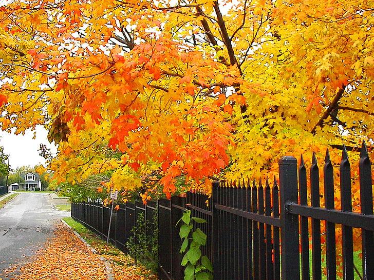 padec, dreves, jeseni, narave, sezona, sezonske