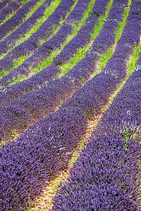 Provença, lavanda, violeta, porpra, flors d'espígol, Mediterrània, França